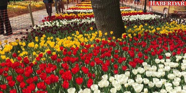 13. İstanbul Lale Festivali başladı