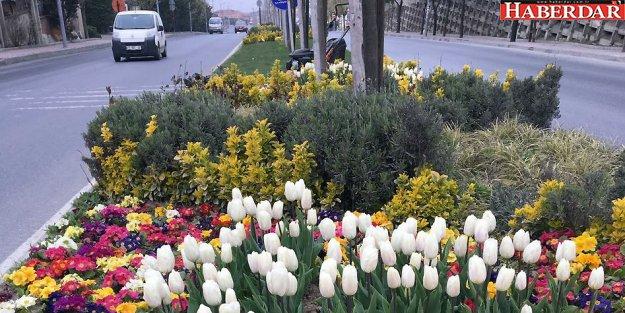 Bahar mevsimi en çok Büyükçekmece'ye yakışıyor