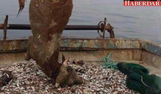 Balıkçılar şaşkına döndü: Balık yerine...