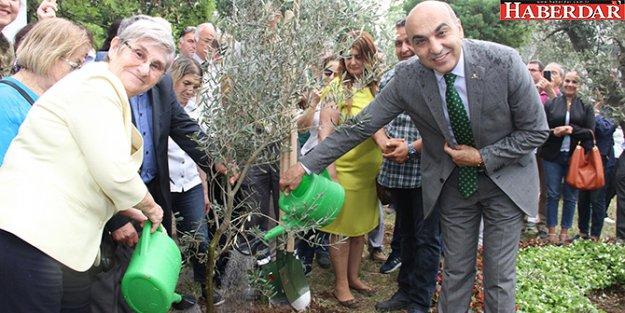 Başkan Kerimoğlu Canan Karatay ile beraber zeytin dikti