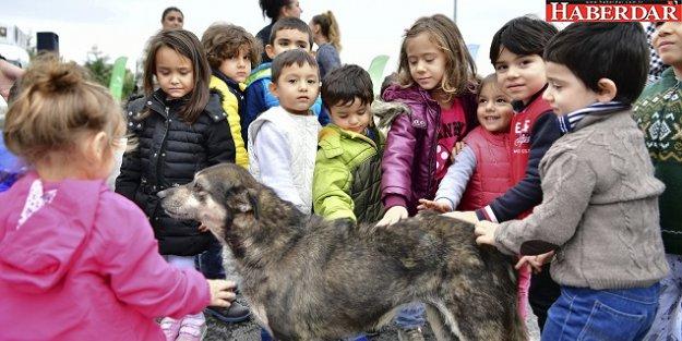 Beylikdüzü'nde çocuklar can dostlarıyla buluştu