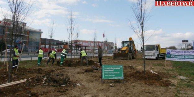 Büyükçekmece Belediyesi, işgal edilen alanları ağaçlandırıyor