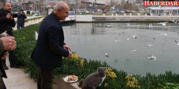 Büyükçekmece Belediyesi Sokak Hayvanların Bakım ve Tedavilerini Üstleniyor