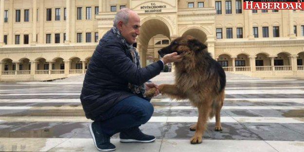 Büyükçekmece'de sokak hayvanları kış aylarında da aç kalmıyor