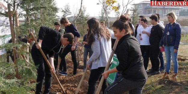 Büyükçekmece'de yüzlerce ağaç daha toprakla buluştu