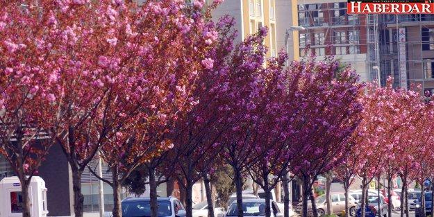 Büyükçekmeceliler rengarenk bir ilkbahar yaşıyor