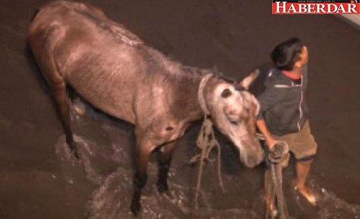 Dereye Düşen At İtfaiye Ekipleri Tarafından Kurtarıldı