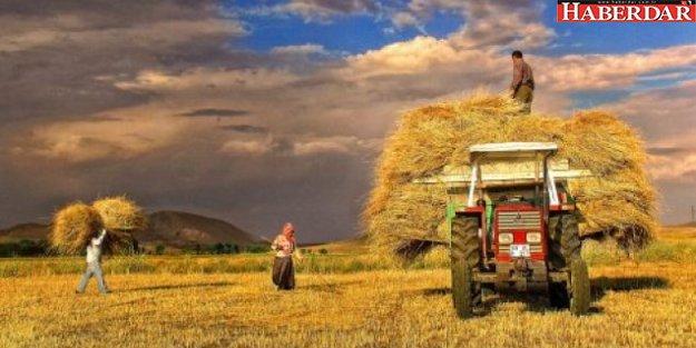 Döviz kuru tarımı vurdu