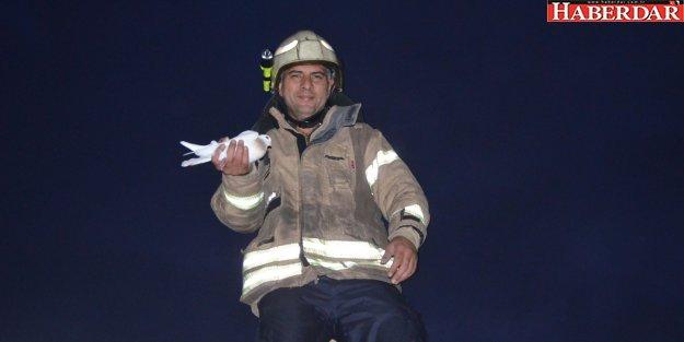 Güvercin operasyonu