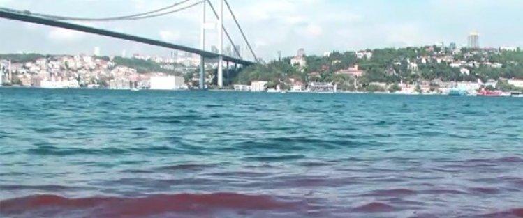 Kurban kanları yine İstanbul Boğazı'na aktı