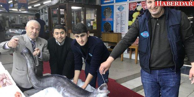 Marmara'dan 3 metre yılan balığı çıktı