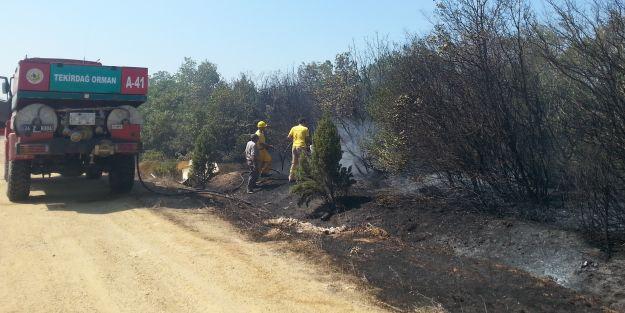 Silivri'de orman yangını