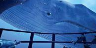 Ailelere Mavi Balina uyarısı: Geç olmadan kontrol edin