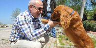 Akgün: Hiçbir sokak hayvanı aç ve susuz kalmayacak