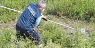 Avcılar#039;da sineklere karşı ilaçlama