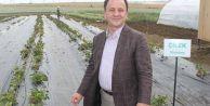 Başkan arazileri tarıma açtı