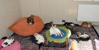 Belediye'nin örnek kedi evi