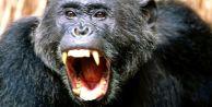 Fatih'te  Maymun Parktaki Çocuğa Saldırdı