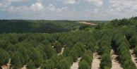İstanbul#039;a 150 bin ağaç dikilecek
