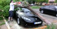 Kasırga gibi esti, ağaçları devirdi