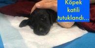 Köpek katili tutuklandı...