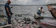 Küçükçekmece gölü ölü balık kaynıyor!