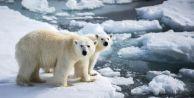 Kutup 25 derece ısındı Avrupa dondu