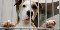 Petshop#039;larda kedi ve köpek satışına yasak geliyor
