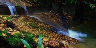 Şehir sularının %63#039;ü ormanlardan geliyor