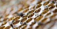 Sigaradan alınan vergiye zam!