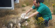 Sokak hayvanları aşılandı