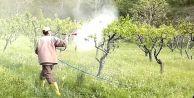 Tarlaya Sıkılan Böcek İlacı 20 Can Aldı