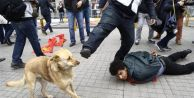 Yere Yatırılan Göstericiye Şefkat Gösteren Köpeğe Polisten Tekme