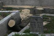 Esenyurt'ta ağaçları katlettiler