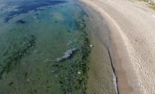 Avcılar'da sahilde deniz anası istilası havadan görüntülendi