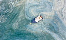 Müsilaj kabusu sürüyor: Marmara Denizi'nden balık yenir mi?