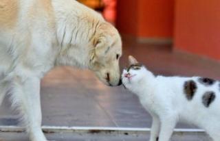 İBB'den SemtPati projesi: Sokak hayvanlarının...
