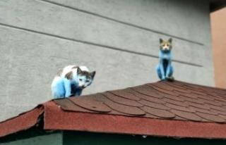 Küçükçekmece'de kediler 'Şirinler'e...