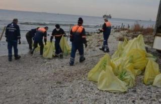 Avcılar sahilinden dev denizanaları toplanıyor;...