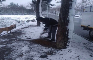 Avcılar Belediyesi sokak hayvanlarını unutmadı