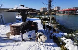 Büyükçekmece Belediyesi soğuk havada sokak hayvanlarını...