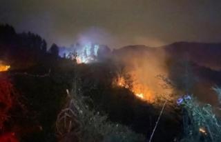 Rize'de orman yangını!