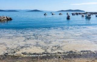 Marmara Denizi'nde tehlike çanları: 'Sıradan...