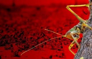 Şimdi de böcek alarmı! İklim değişikliği yer...