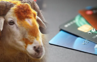 Diyanet: Kredi kartıyla kurban alırken faiz ödenirse...
