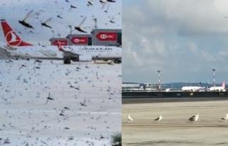 Korku filmi gibi bir sabah: İstanbul Havalimanı'nda...