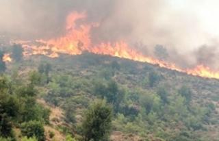 14 gün süren Köyceğiz yangını kontrol altına...