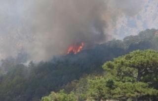 Köyceğiz'de başlayan orman yangını Denizli...