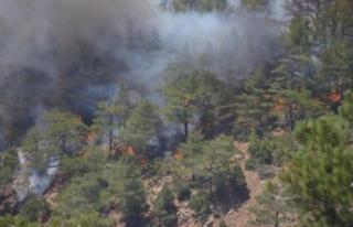 Köyceğiz'deki orman yangını hakkında korkutan...