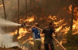 Türkiye 9 gündür yanıyor: Orman yangınlarında...